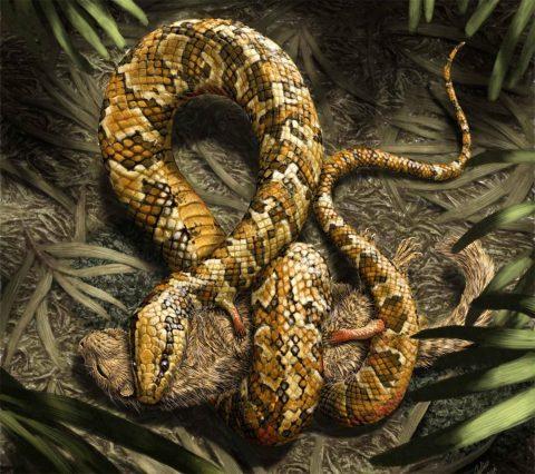 4本足のヘビ